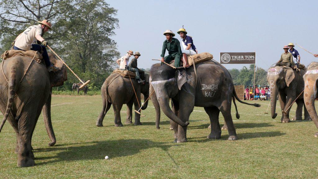 Elephant Polo in Nepal